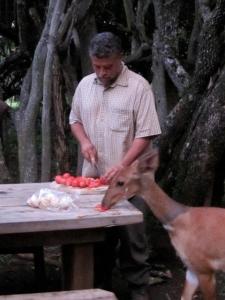 Bushbuck for diner